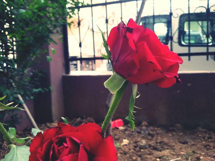 My Red Flower 😍