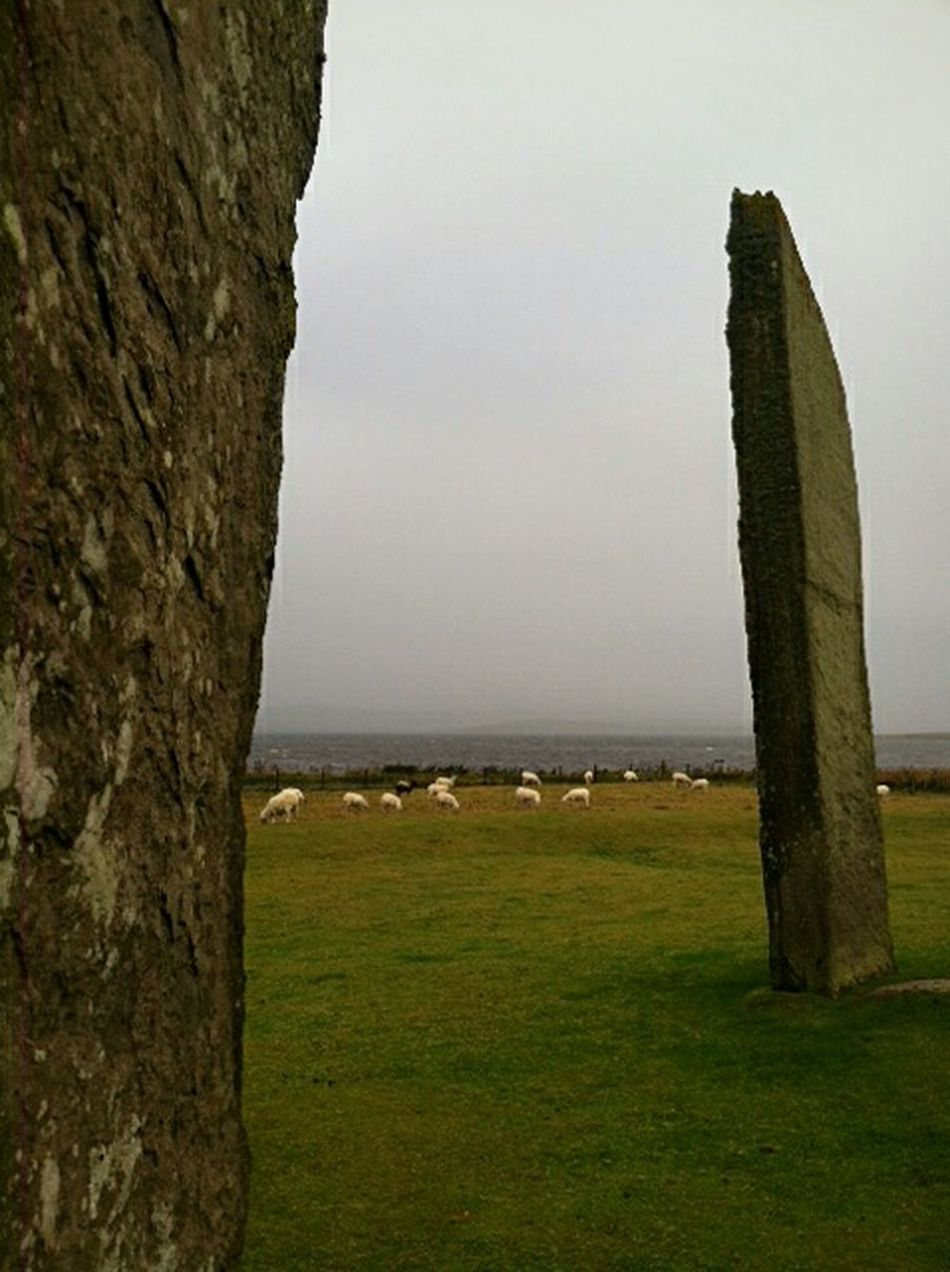 Feel The Journey Standing Stones Standing Stones Of Stenness Orkney Orkneyislands Orkneyisles Orkney-Islands Orkney_islands Sheeps Sheep🐑 Scotland Beautiful Orkney Green