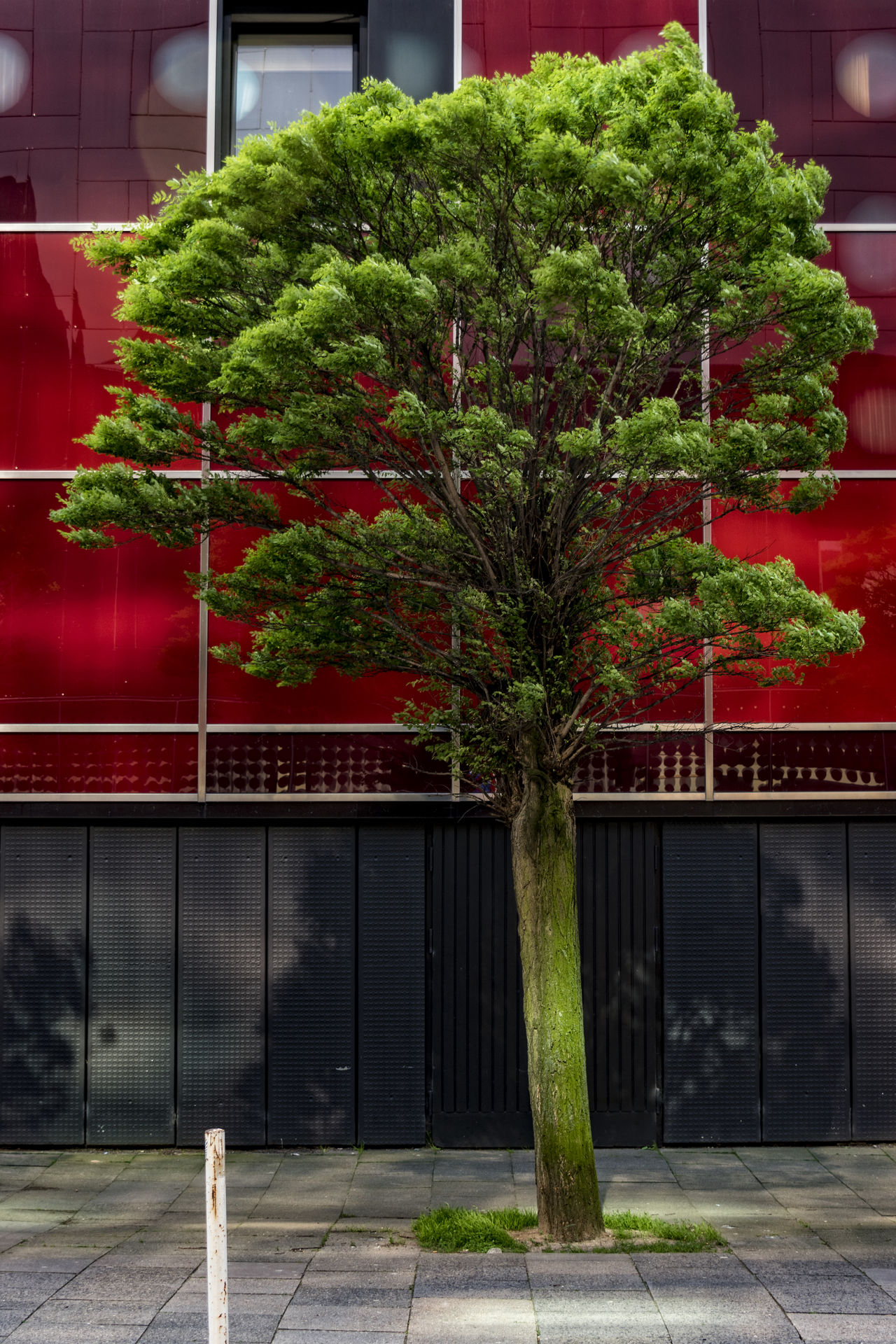 complementary Architecture Building Exterior Day Green Color Growth Hamburg Lonley Nature No People Outdoors Plant Red Street Tree