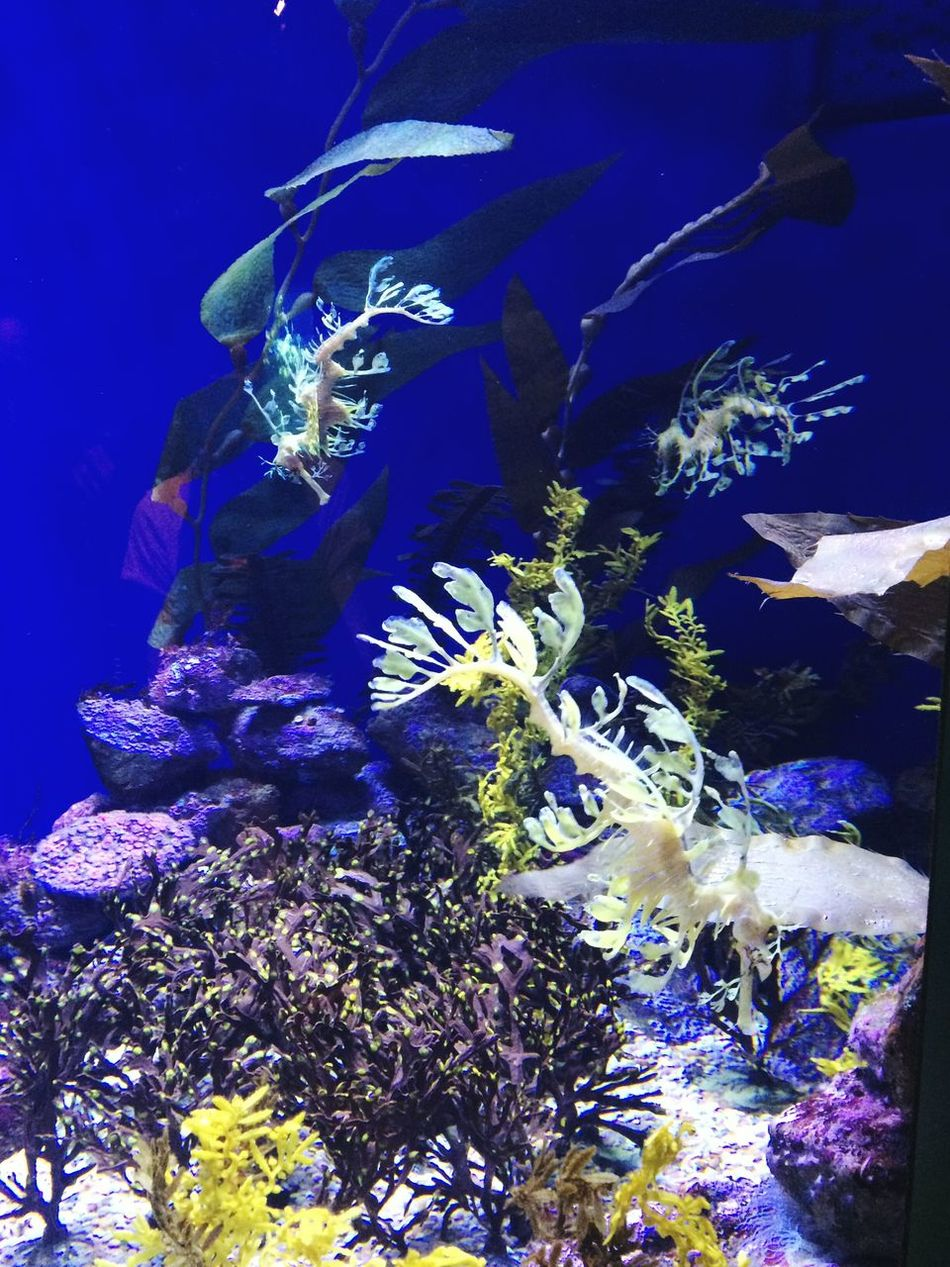Taking Photos Hello World Enjoying Life Pivotal Ideas Backgrounds Tranquility Glowing Color Palette From My Point Of View EyeEm Nature Lover Colour Of Life Exceptional Photographs Beauty In Nature Aquarium Sea Life Underwater Shootermag Oceanlife Ocean Underwater World Growth Eyeemphoto