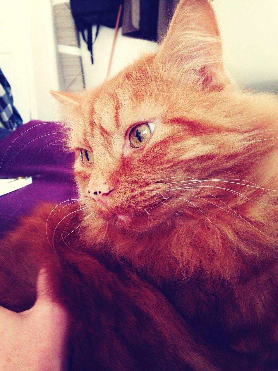 Handsome. Cat