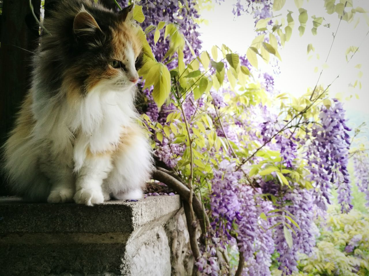 Pets Cat Italy Glicine Nature First Eyeem Photo