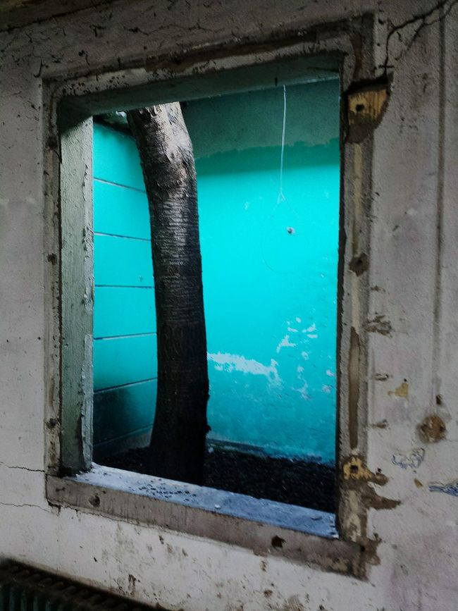 Inside of the Abandoned Building Abandoned House Abandoned Places Frame It! Hugging A Tree Smart Simplicity Taking Photos Daylight Demarcation Process