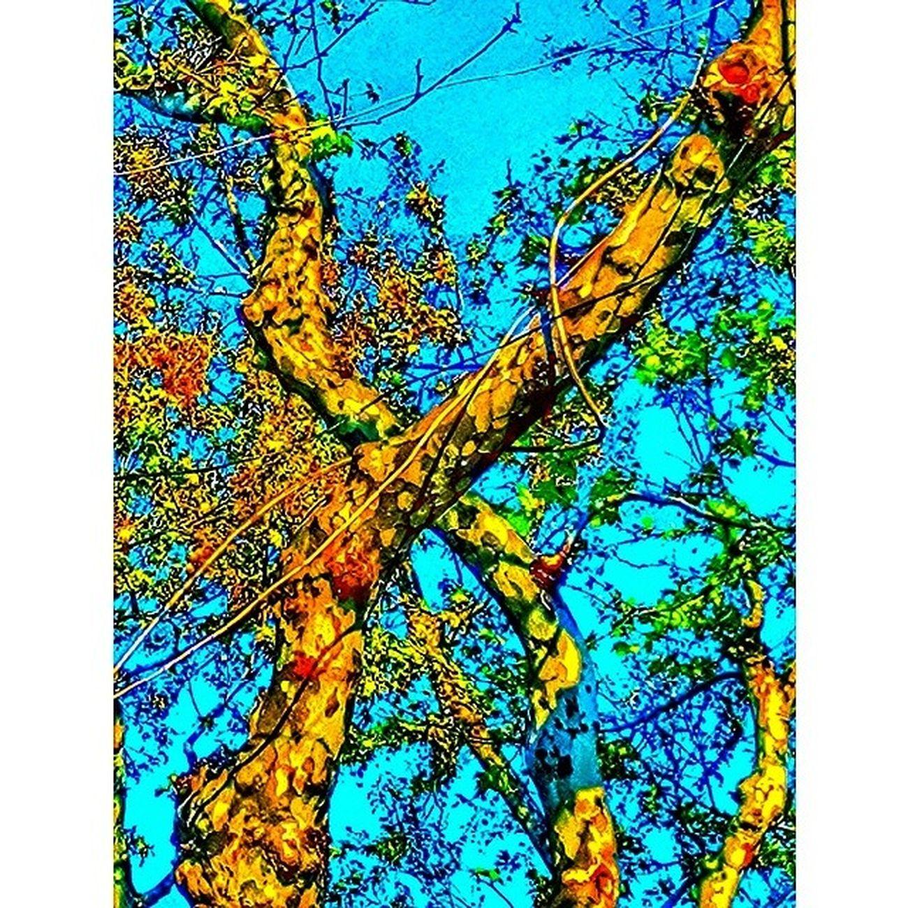 Improvisation Color Colour Turkuaz çınar tree sky life