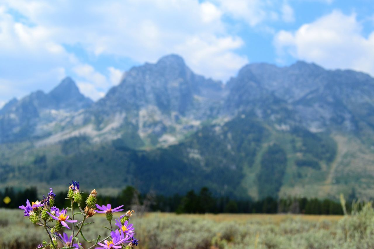 Beauty In Nature Day Field Field Flower Flower Head Fragility Freshness Grand Teton National Park  Grand Tetons Growth Landscape Mountain Mountain Range Mountains In Background Nature No People Outdoors Pink Flowers Plant Scenics Sky Violet Flowers