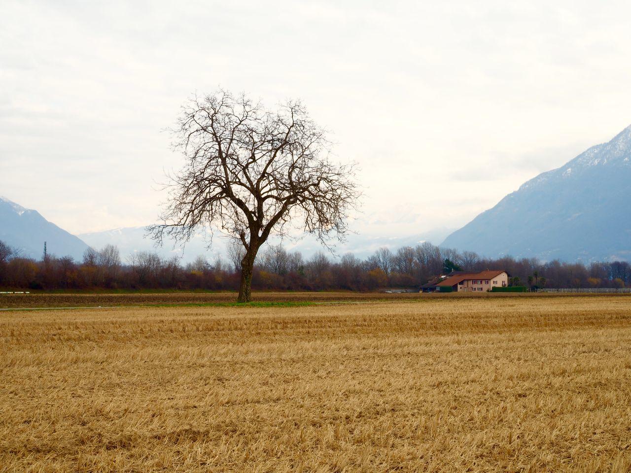 Day Farm Field Mountains No People Tree Wheat Wheat Field Winter