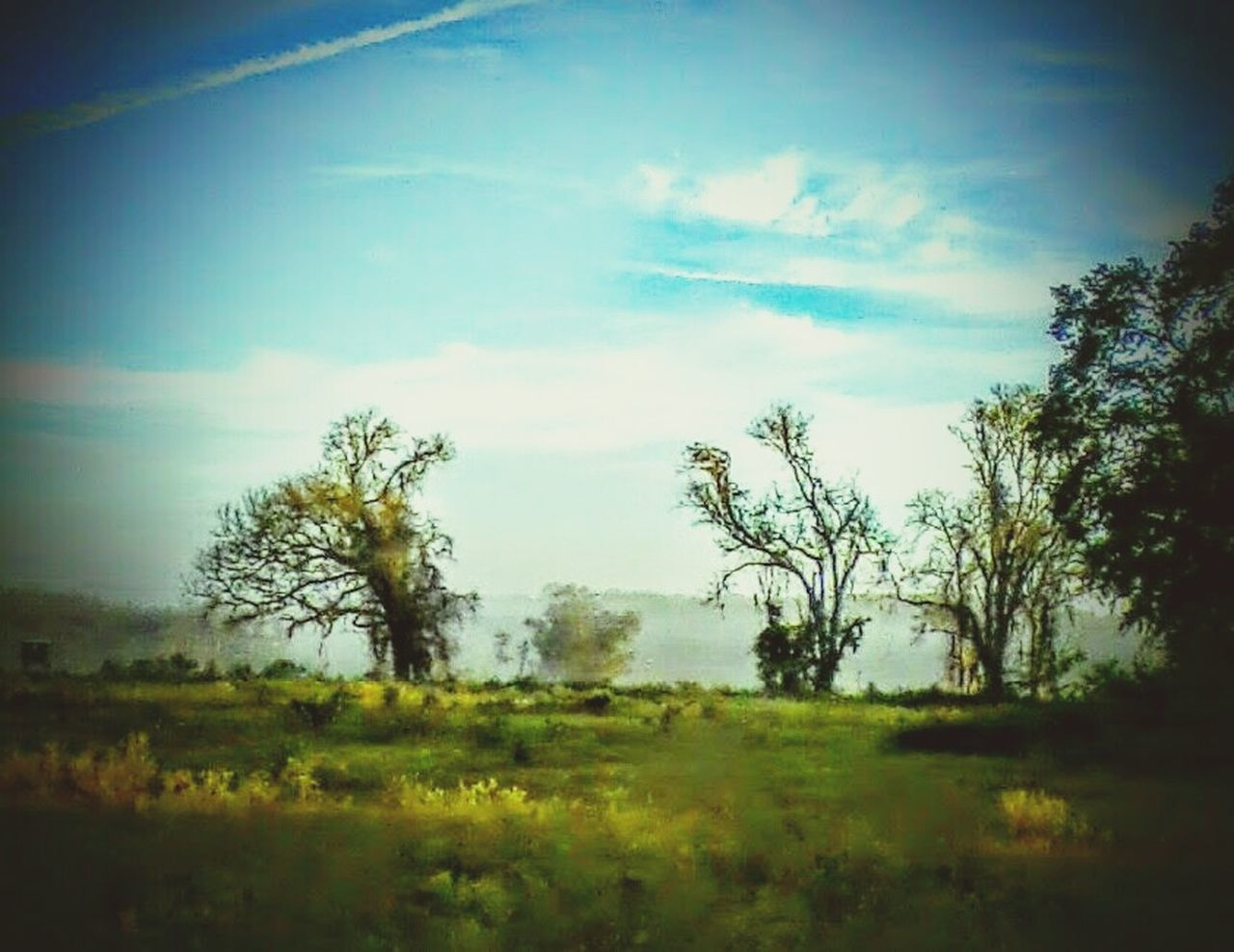 landscape, field, tree, nature, sky, beauty in nature, no people, grass, day, outdoors