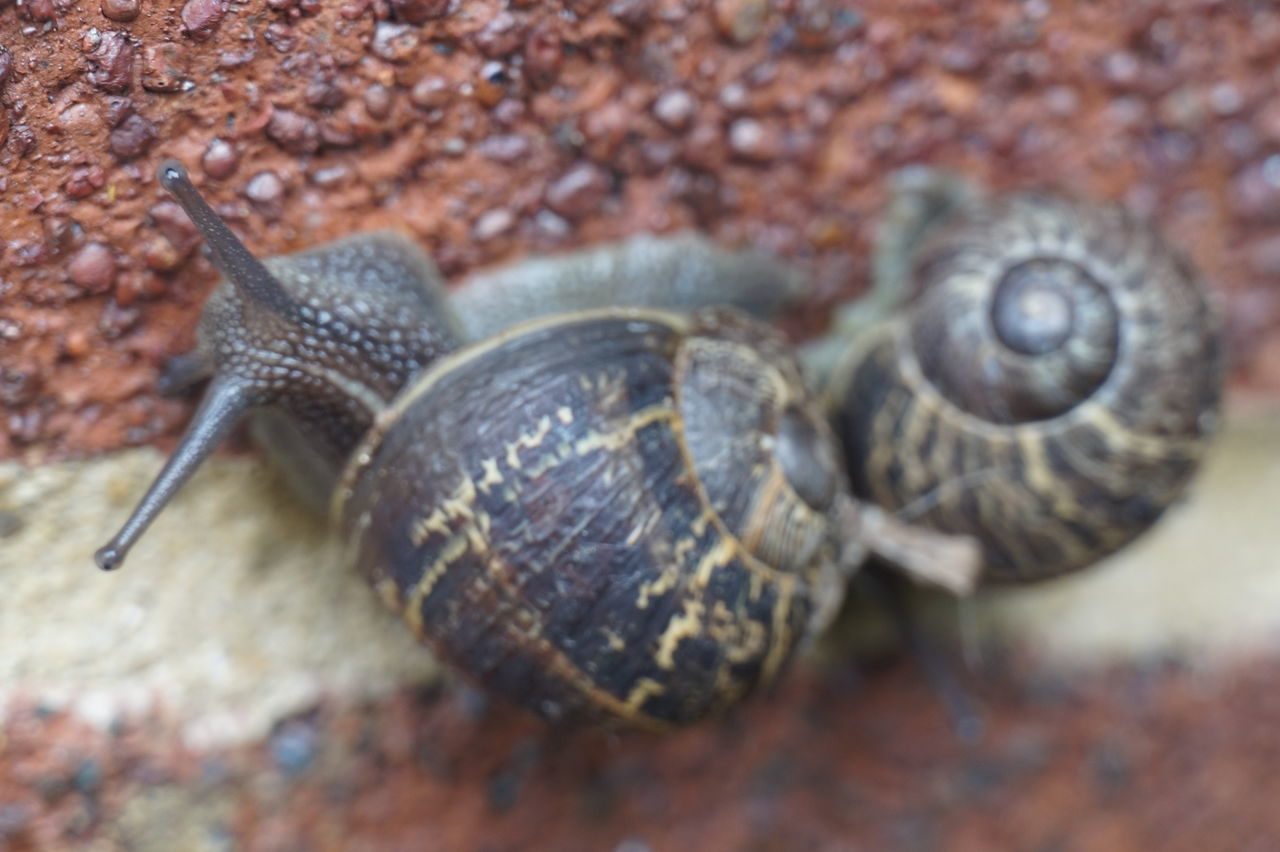 2 2 Shells 2 Snails Brick Wall Brick Work Brickwork  Close-up Couple Day Escargot Eyes Focus On Foreground Hiding In Plain Sight Mortar Natural Pattern Nature No People Outdoors Pic 6000 Selective Focus Snail Two Is Better Than One