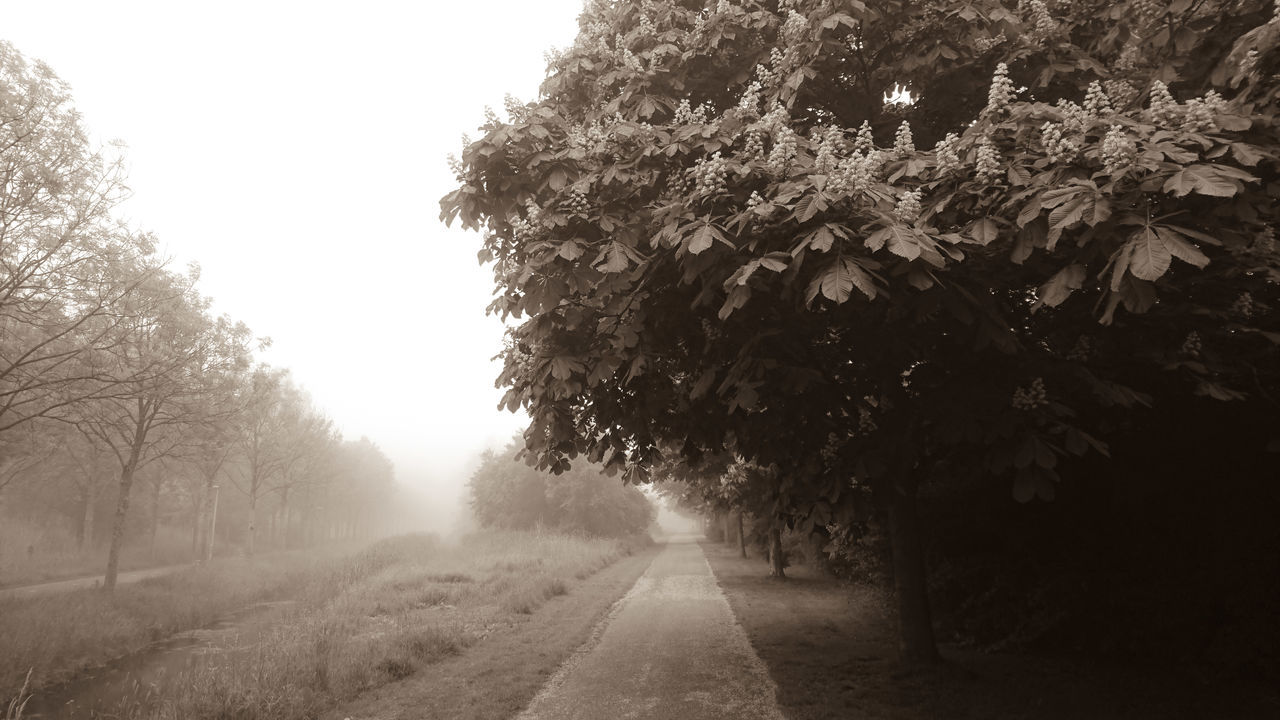 Early Morning Tree Nature No People Fog Road Rural Scene Outdoors Growth Beauty In Nature Scenics Day Freshness Sky Monochrome Sepia