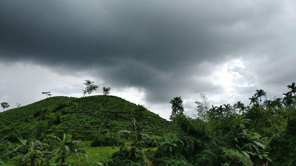 NoEditNoFilter Natural Beauty Blackclouds Cloudy Storm Cloud BeautifulBANGLADESH Sylhet Teagarden Tree Sky