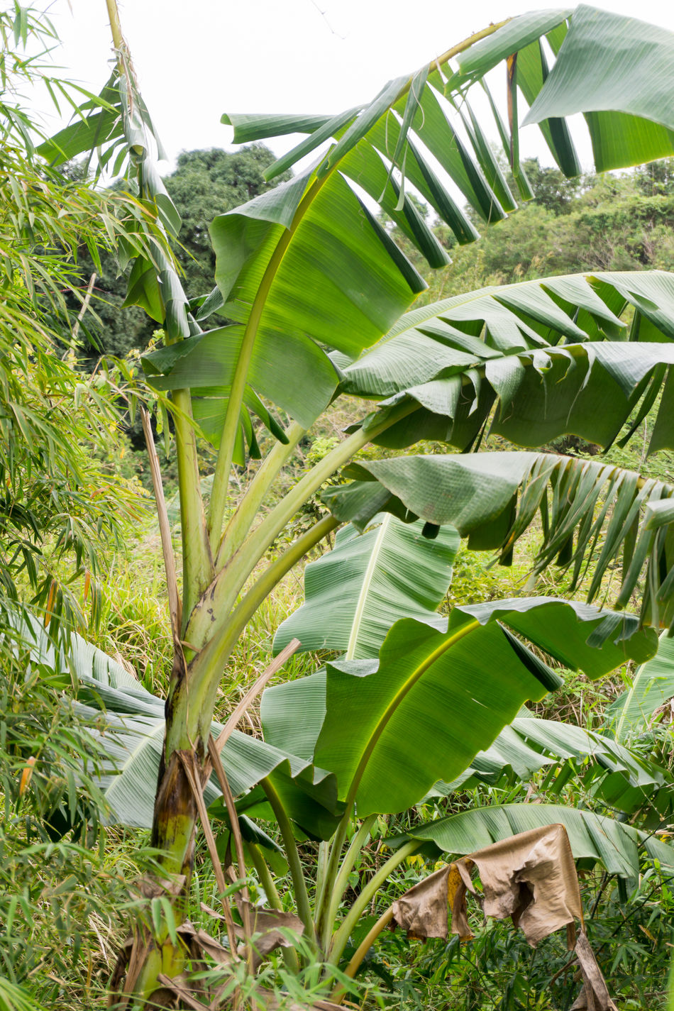 Tropical plants in the Philippines 2017 Daytime Green Leaves. Outdoor Photography Outdoors Outside Rural Scene Tree Tropical Climate Tropical Plants