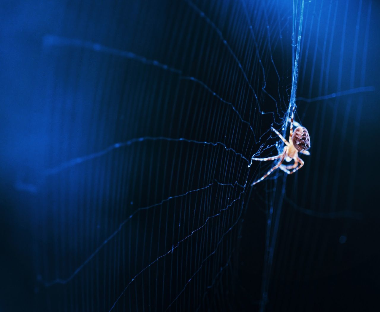 one animal, insect, spider, animal themes, spider web, animals in the wild, animal wildlife, close-up, web, no people, outdoors, day, nature
