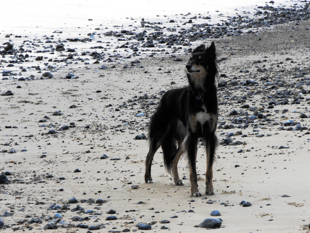 A dog on Mundesley Beach Animal Themes Beach Black Day Dog Domestic Animals Fur Happy Mammal Nature No People Outdoors Pebbles Pets Sand Seaside Sky
