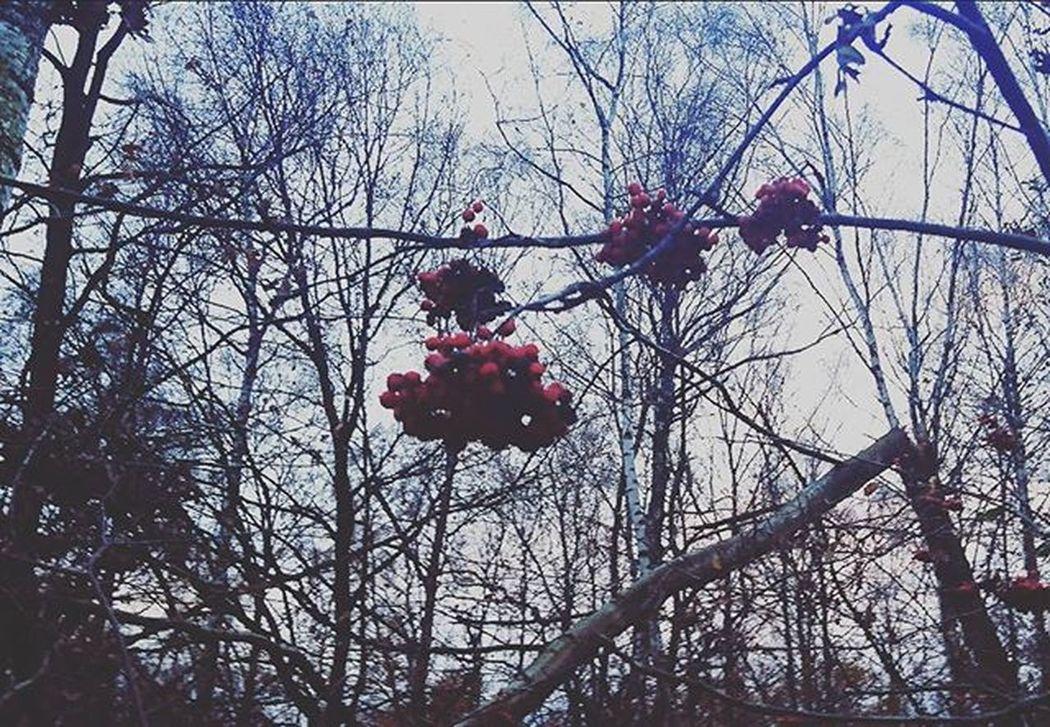 Ostatnie podrygi jesieni. Vscogood Vscocam Igerssilesia Nature Instarybnik Forrest Welesie