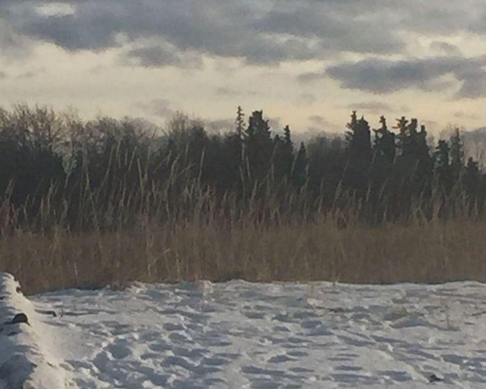 Alaska Outdoors Winter Snow