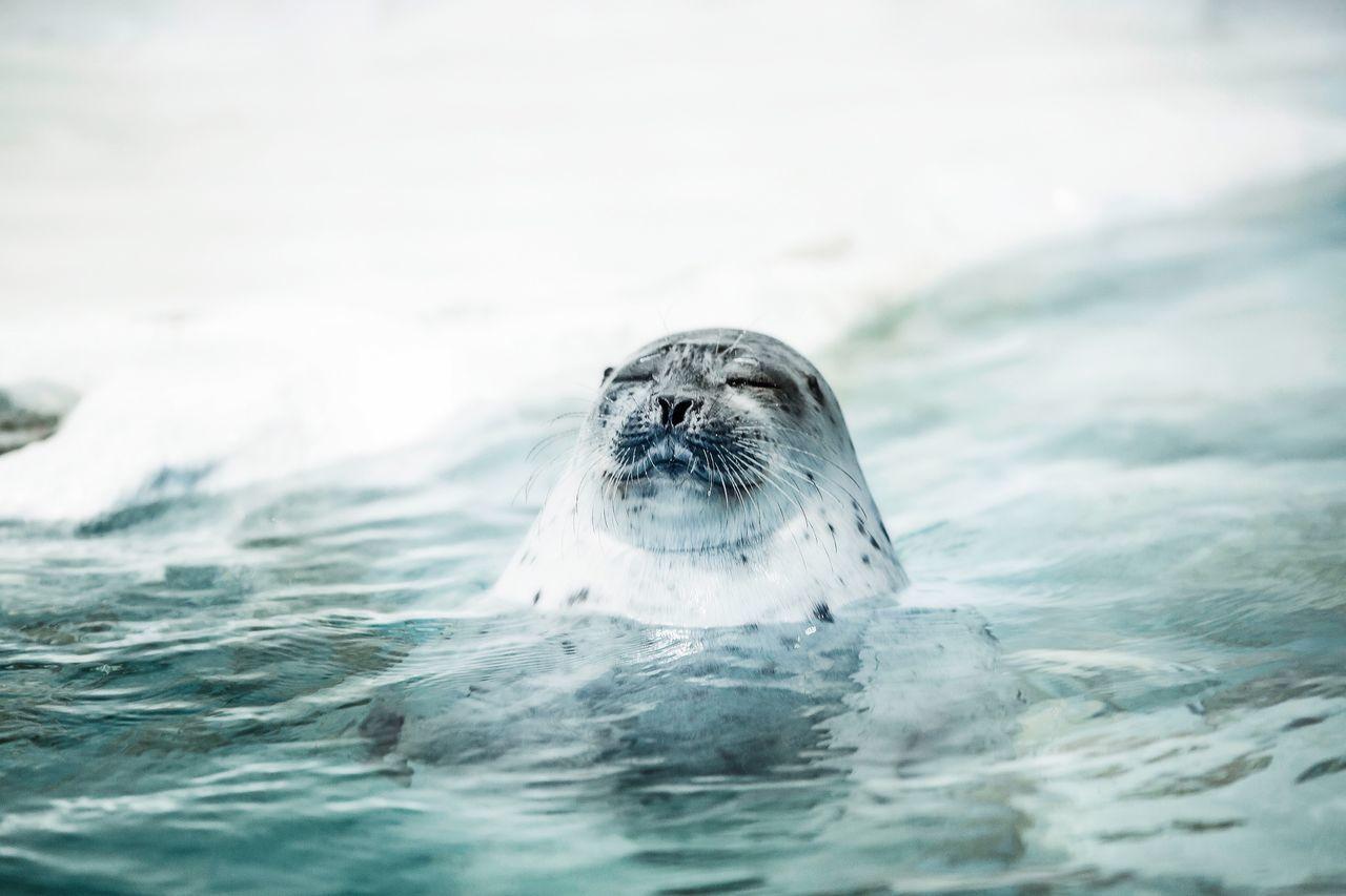 Seal Aquarium Expression Selfless Canon5Dmk3