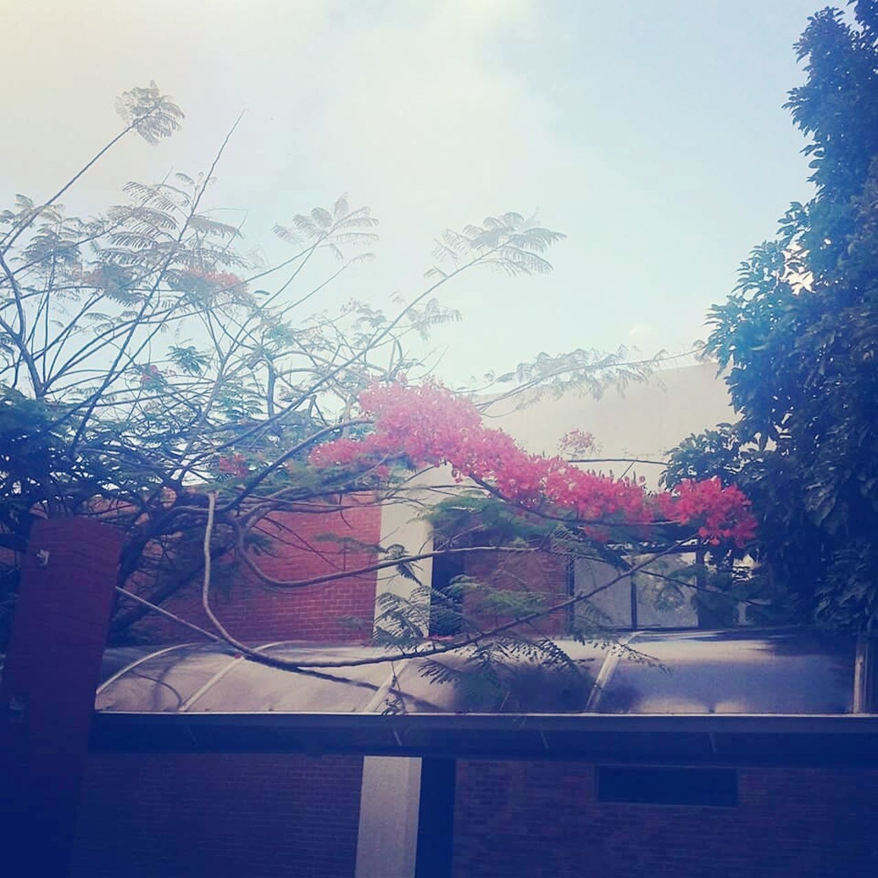 tree, sky, hanging, day, outdoors, plant, no people, low angle view, growth, building exterior, nature