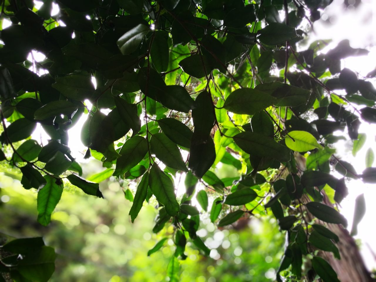 growth, tree, nature, no people, low angle view, leaf, plant, outdoors, day, beauty in nature, close-up, branch, sky