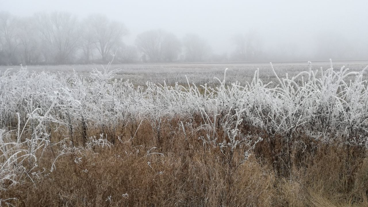Nature Field Tranquil Scene Tranquility Winter Beauty In Nature Cold Temperature Frozen Nature Outdoors