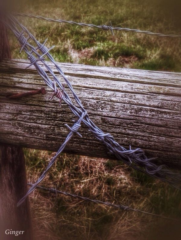 Good Morning! and Happy Barbed Wire Wednesday ❤️ Eye Em Nature Lover Happy Wednesday!