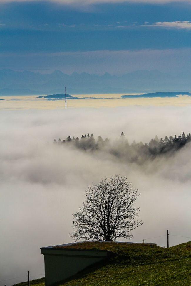 Rheintal  im Nebelmeer Misty Hotzenwald Singletree Landscape_Collection Landscape