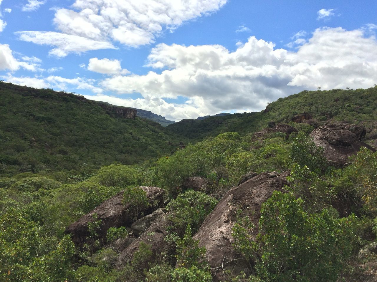nature, mountain, sky, landscape, vegetation, beauty in nature, no people, outdoors, scenics, growth, day, foliage, tree