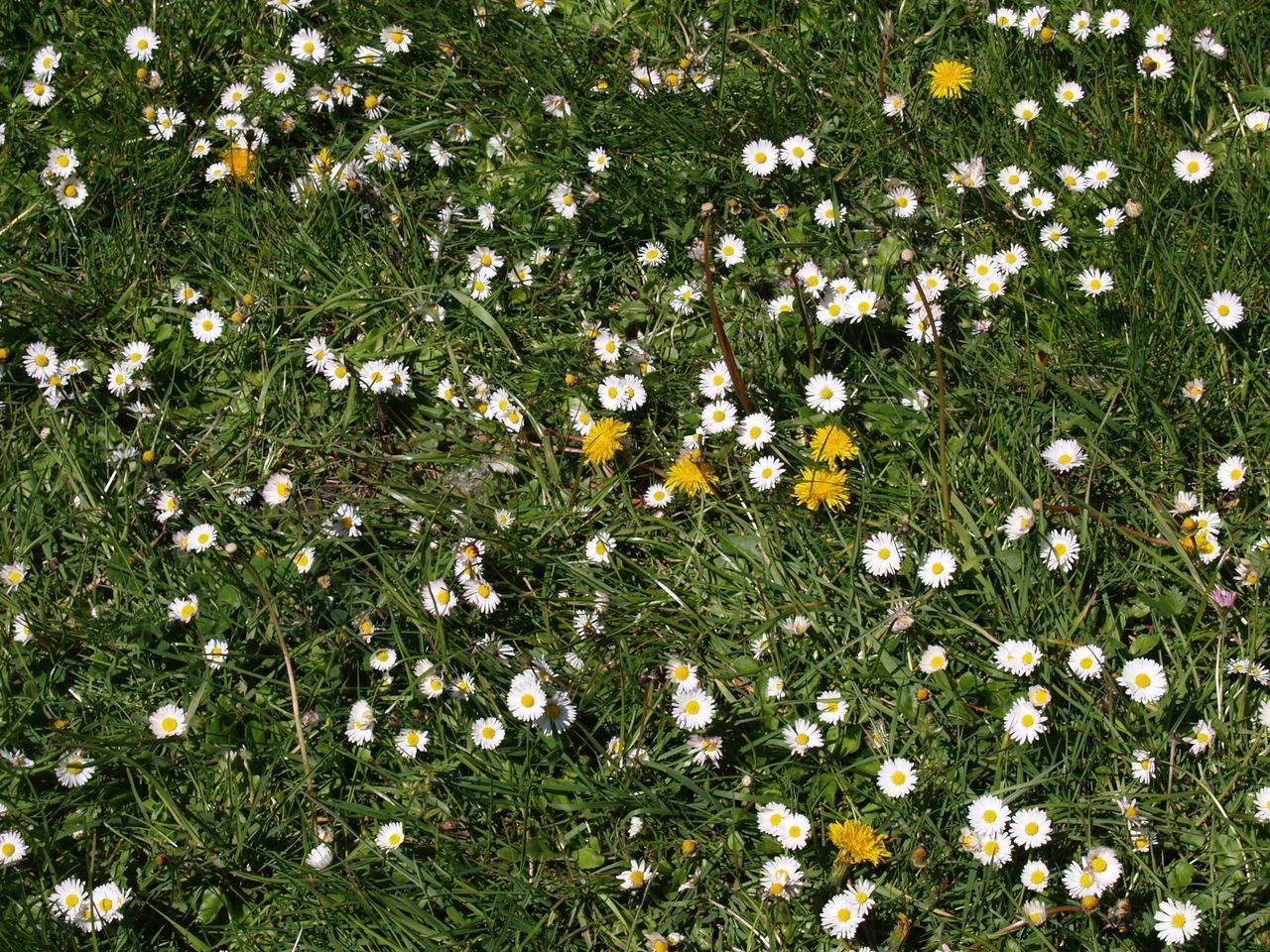 flower, grass, nature, growth, uncultivated, meadow, field, delicate, summer, beauty in nature, fragility, freshness, no people, beauty, blooming, outdoors, flower head, day