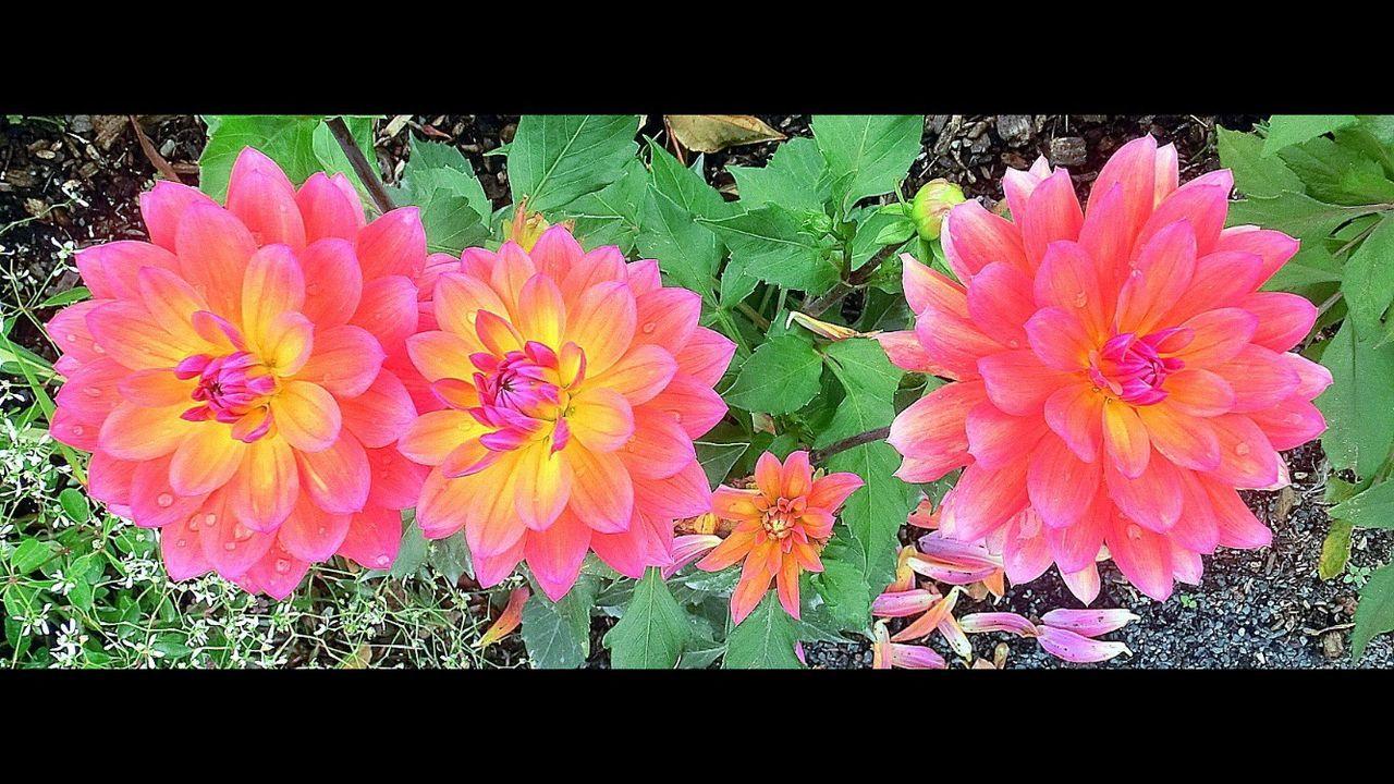 Bridge Of Flowers Flower Petal Beauty In Nature Nature No People Blooming Outdoors