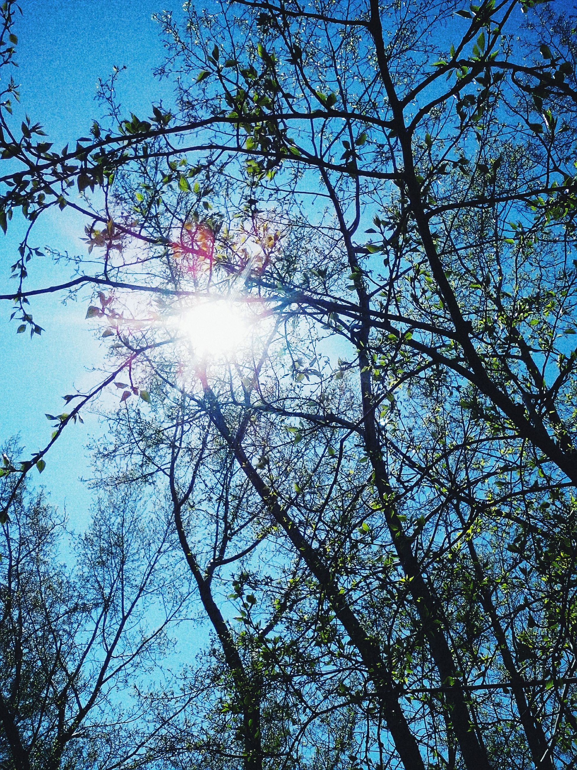 sun, tree, low angle view, branch, sunbeam, sunlight, lens flare, beauty in nature, tranquility, nature, growth, sky, clear sky, blue, bright, scenics, sunny, back lit, silhouette, day