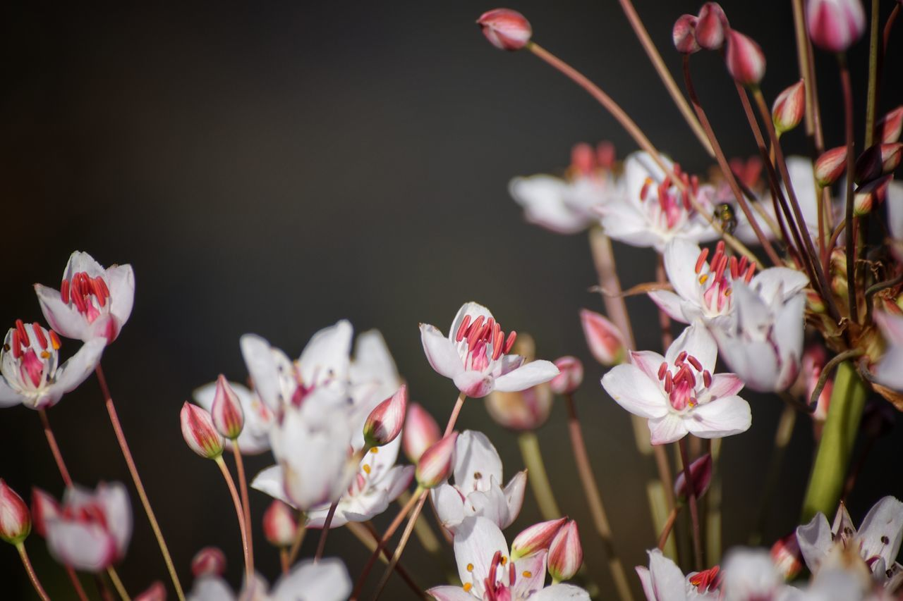 2017 Juli Niklas EyeEm Selects Showcase July 2017 Huddinge Sweden Flower Pink Color Blossom Nature Beauty In Nature Fragility Outdoors Freshness Growth Flower Head
