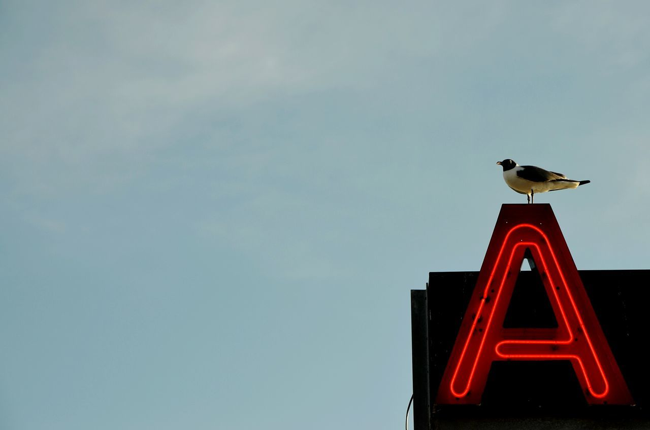 Beautiful stock photos of letter, Alphabet, Animal Themes, Animals In The Wild, Bird