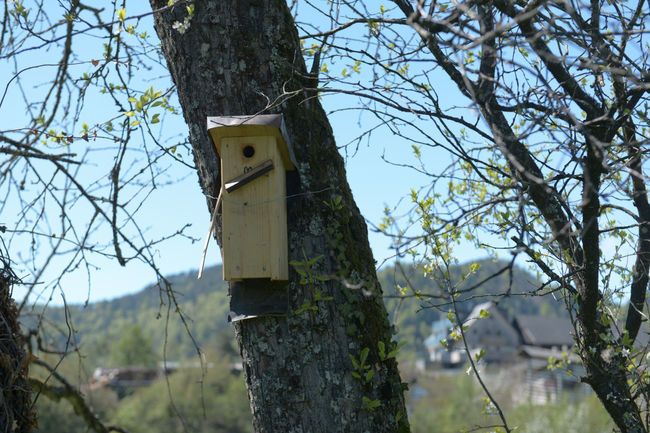 Bare Tree Beauty In Nature Bird Bird House Birdhouse Branch Close-up Day Focus On Foreground Growth Kuku Low Angle View Nature No People Outdoors Pole Scenics Selective Focus Sky Tranquility Tree Tree Trunk Twig Wooden Post Young Birds