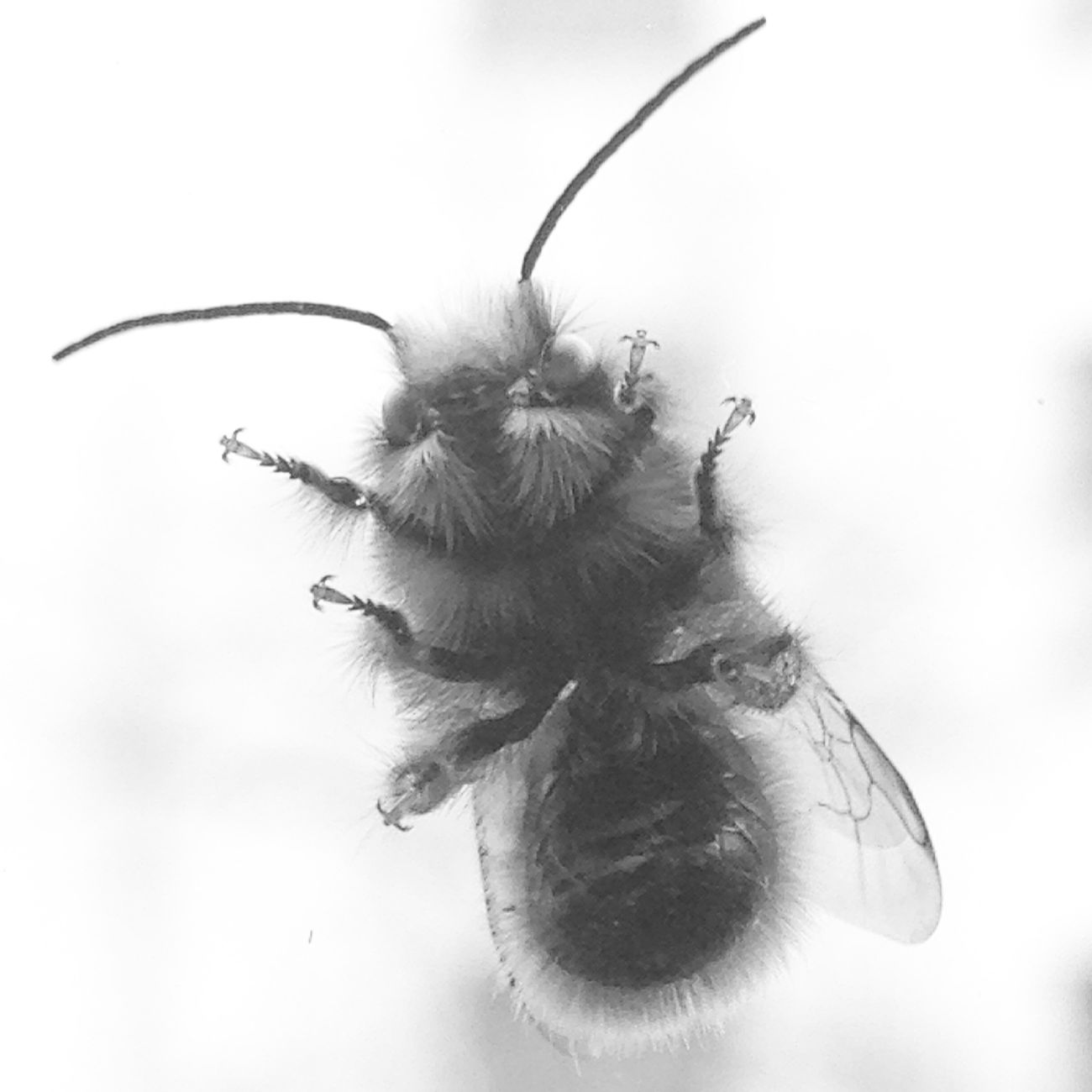 You can call me queen bee <3 Bee 🐝 Abeille Macro