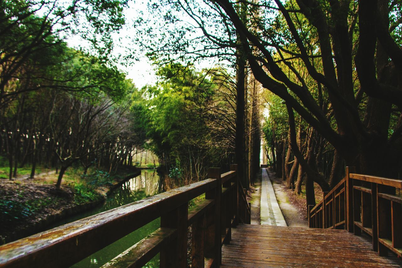 tree, railing, nature, tranquility, forest, growth, outdoors, day, no people, beauty in nature