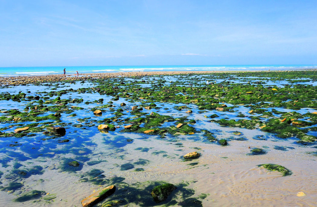 Algaerocks Beach Beaches Crabbing France French Vacations Getting Away From It All Holiday Horizon Over Water Northern France Ozone Pas De Calais Relaxation Sea Tranquil Scene Water Weekend Breaks Wimereux