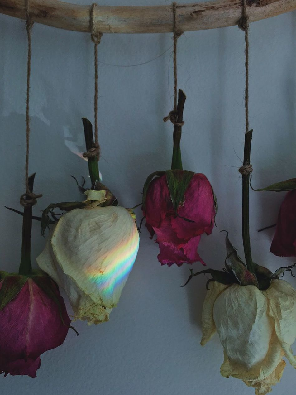Roses Dried Flowers Flower Indoors  Hanging No People Home Interior Fragility Day Stick Wood Wood - Material String EyeEm EyeEm Best Shots Popular Photos Check This Out Photo Photography Rainbow Photooftheday Pink Flower Head EyeEm Gallery EyeEmBestPics