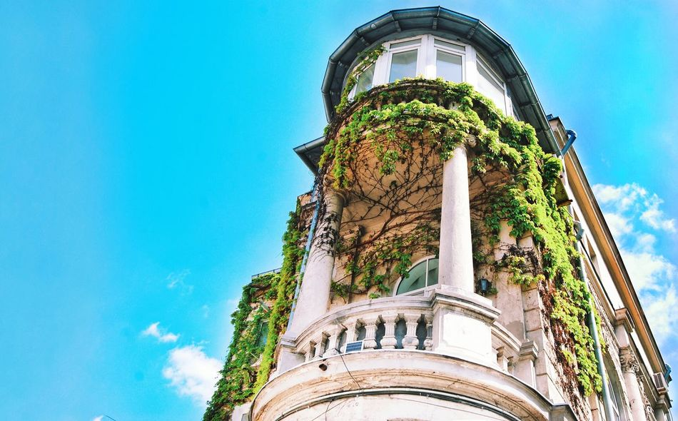 Architecture Building Exterior Blue Outdoors No People Day Sky Low Angle View Built Structure Art Is Everywhere Details Sun Colored Colorful Bucharest Close-up Shadows & Lights Details Textures And Shapes Green City House Balcony Plant Plants And Flowers Green Wall