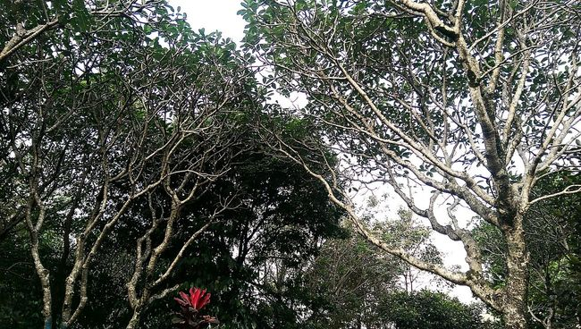 Almost right color Taking Photos Htcm8 Htc One M8 Hugging A Tree Enjoying The Sun Outdoor Photography Panoramic Bandung INDONESIA