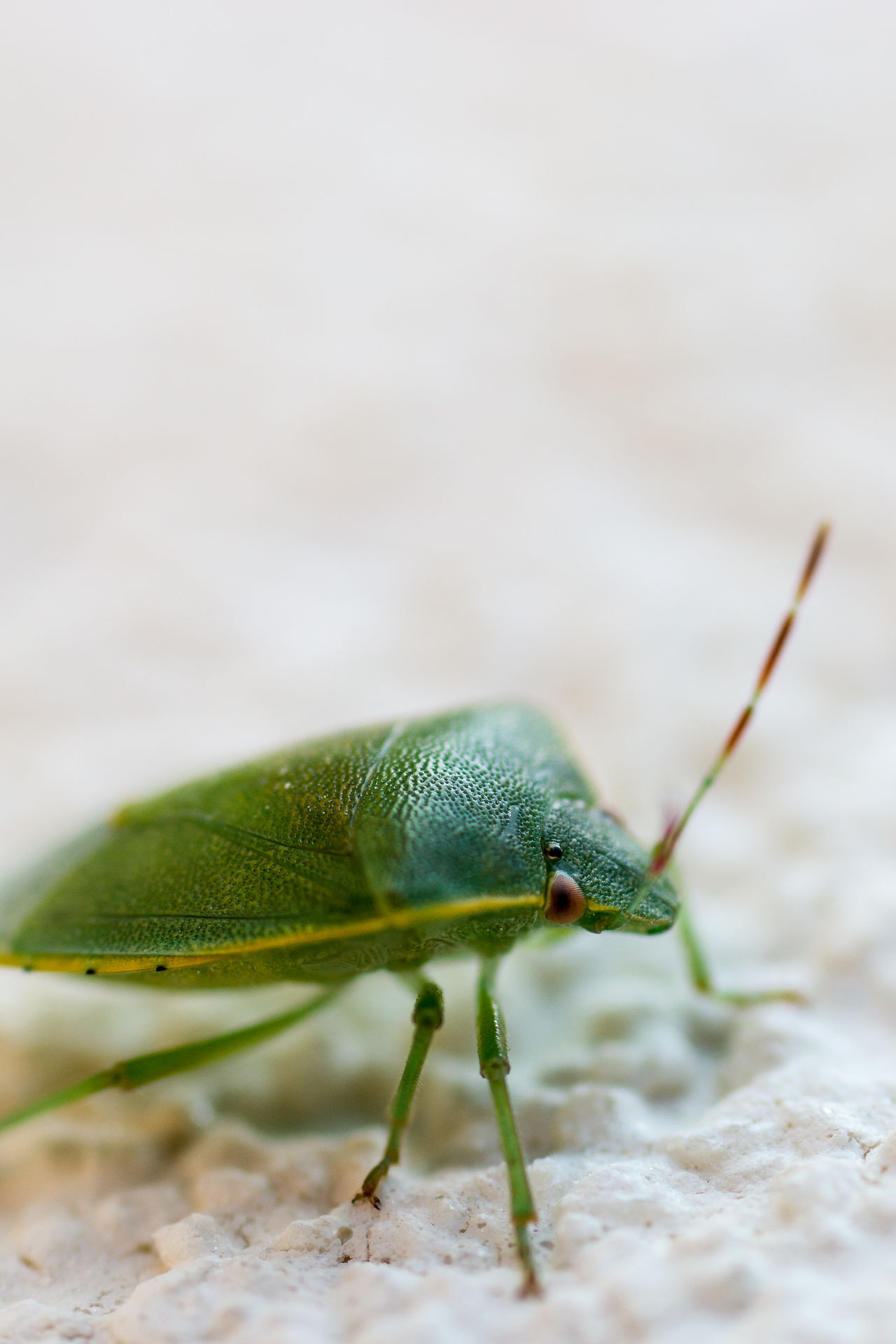 Close-up Green Color Insect Insects  Macro Macro Photography Nature Outdoors Stink Bug Stinkbug Vertical Maximum Closeness