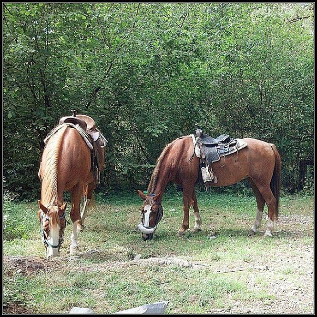 Horses Camping GoodTimes Goodfriends tahuyastateforrest hashtagaddiction droidrazr