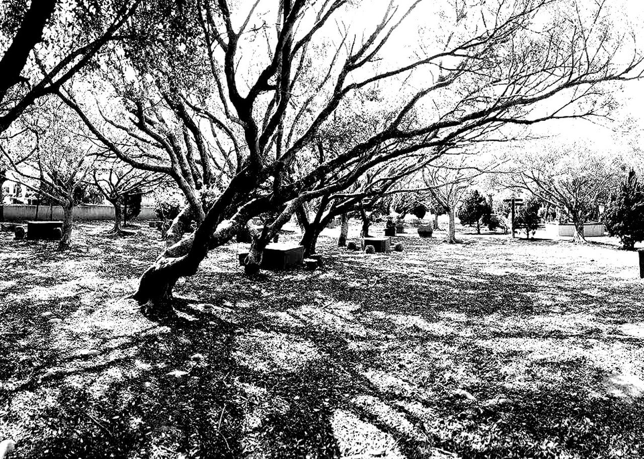 BW3 Photography Nature Lanscape Eyeembest Filter.