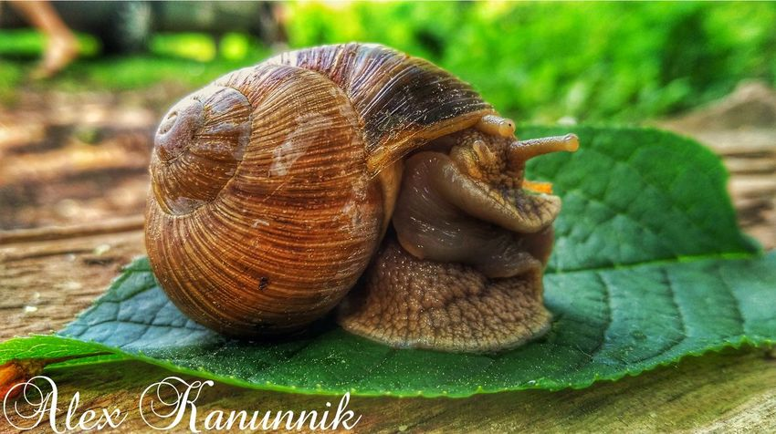One Animal Animal Themes Animals In The Wild Close-up Snail Wildlife Nature Day Animal Wildlife No People Green Color Outdoors Reptile Grass Slug