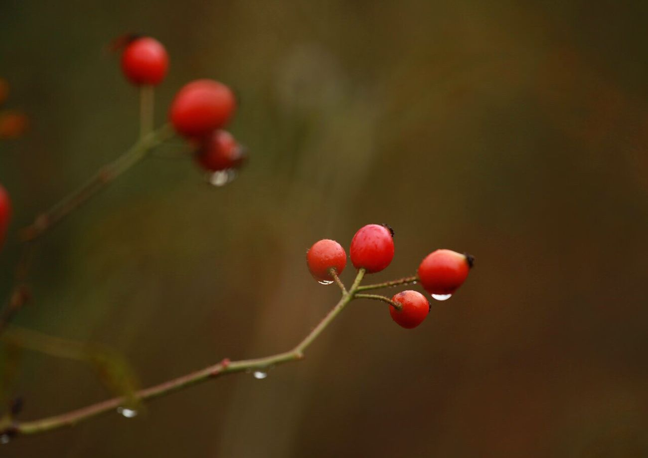 Nature Red Freshness Photographers Environment EyeEmNewHere Photographer Beautiful Nature View Beauty In Nature Landscape Outdoors Drop Rain After The Rain Drops Berry Red Color Weather EyeEm Nature Lover Nature Photography Naturelovers Nature_perfection Naturelover Mountain