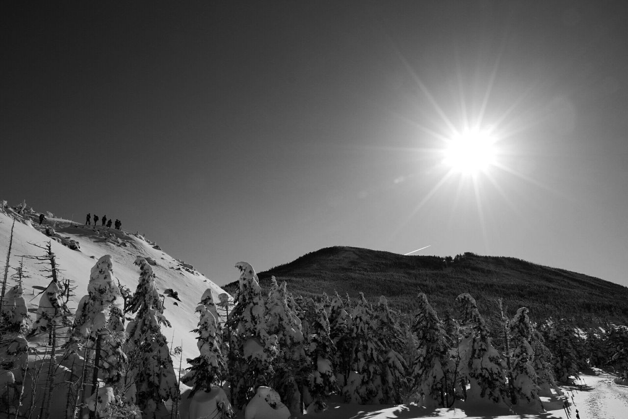 Sun Shining Over Snow Covered Pine Woodland At Mountain