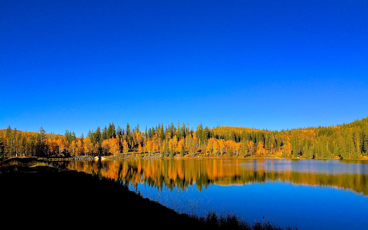 Aspen Trees Autumn Autumn Colors Beauty In Nature Blue Calm Clear Sky Crystal Blue Sky Crystal Blue Water Fall Colors Grand Mesa National Forest Lake Mountain Nature Pine Tree Reflection Scenics Tranquil Scene Tranquility Water Waterfront