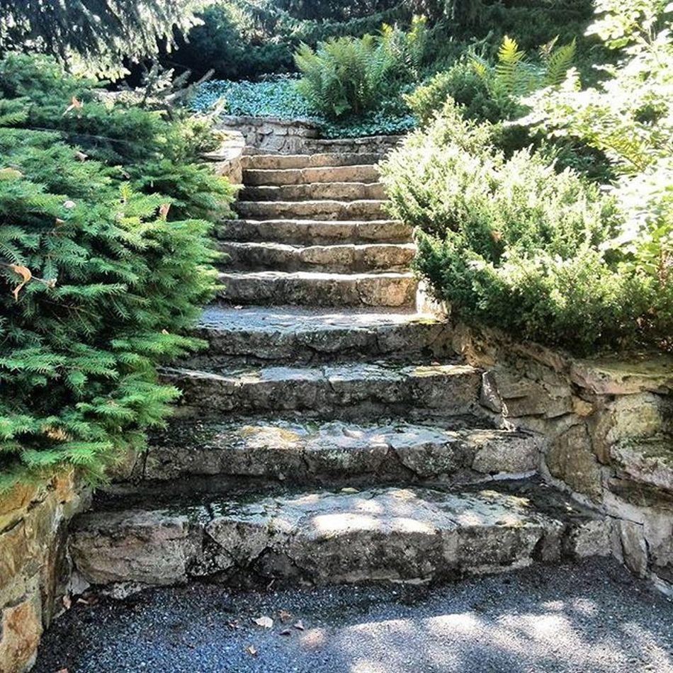 Schody Kamen Zahrada Kere Armosfera Stairs StoneStairs Garden Sunnyday Igerscz