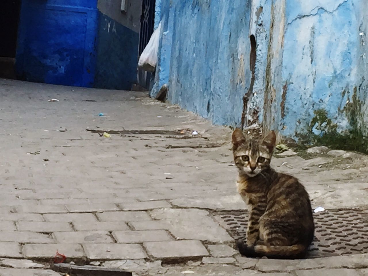 EyeEmNewHere Cat Morocco Tangier Stray Cat Cobblestone Blue Feline Animals Animals In The City Animal Kitty