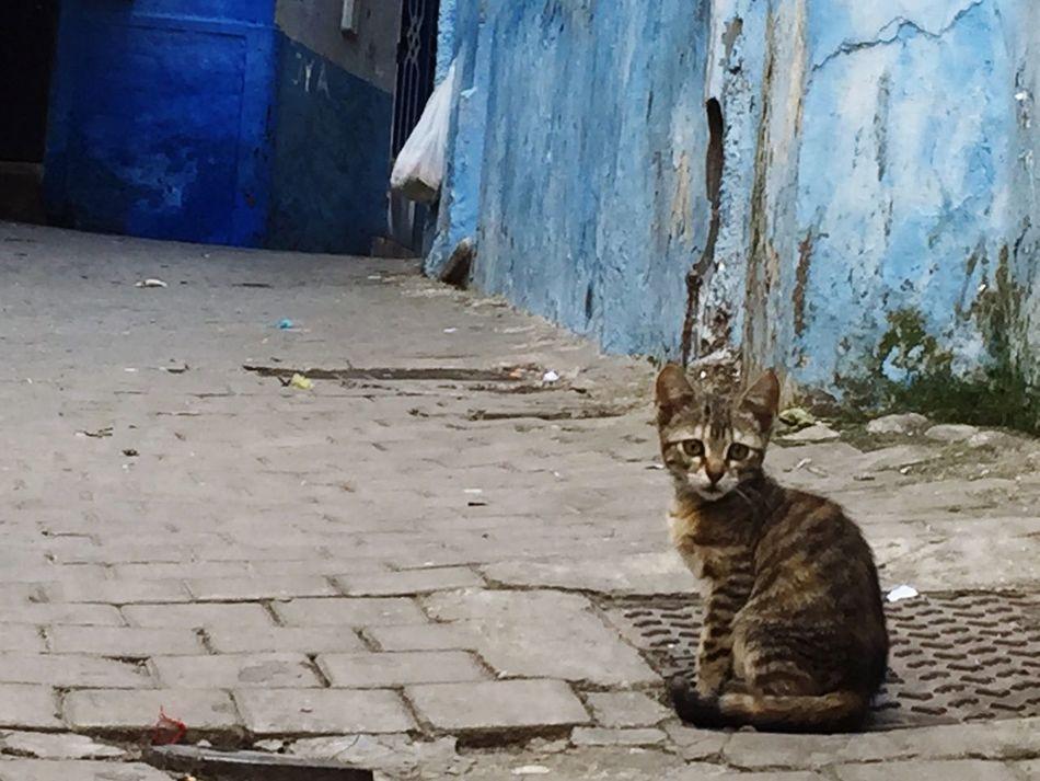 EyeEmNewHere Cat Morocco Tangier Stray Cat Cobblestone Blue Feline Animals Animals In The City Animal Kitty