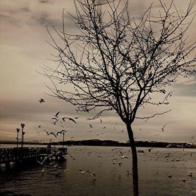 Photo by Filiz Tezgören
