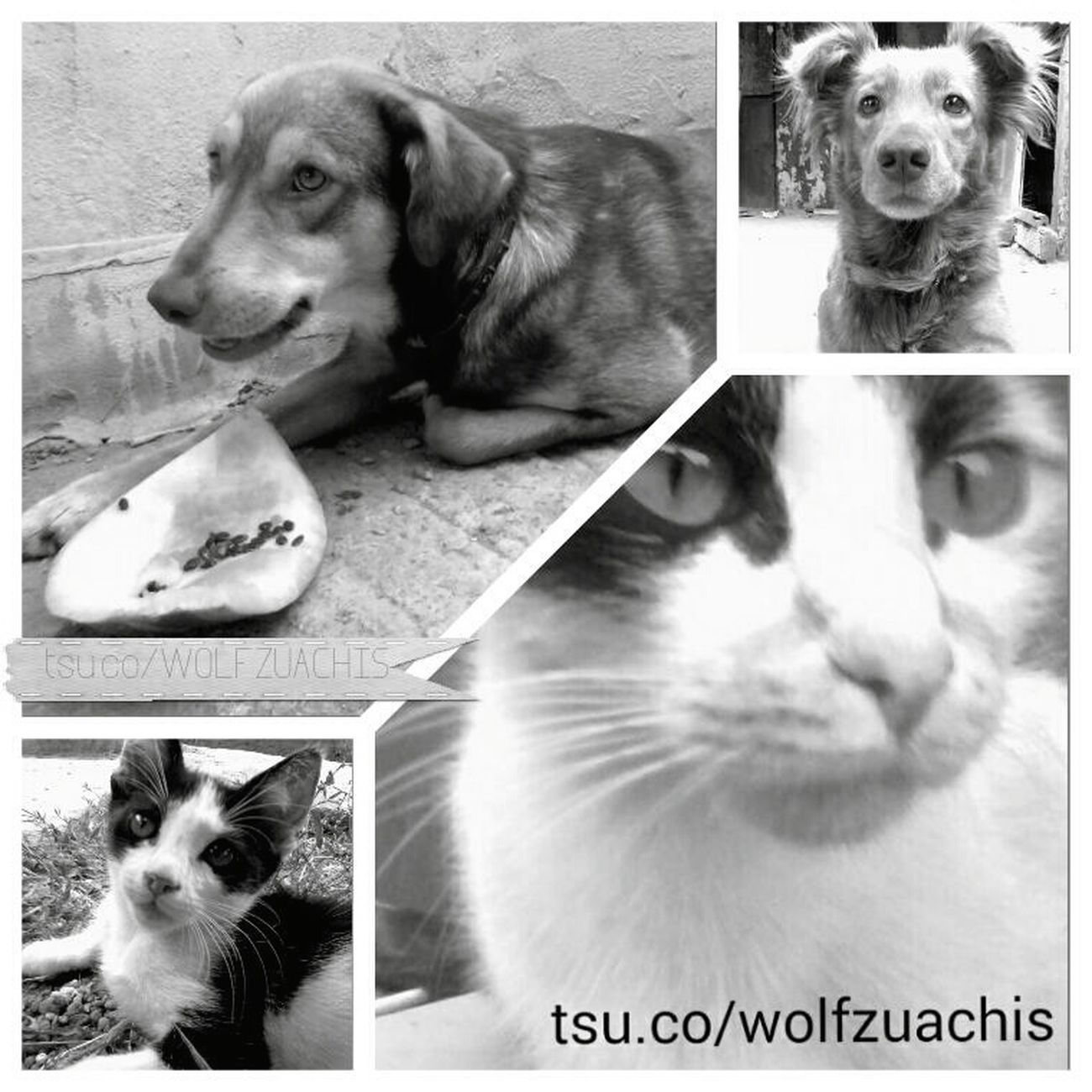 Wolfzuachis Collage My Pets Fluffys Pufosenii Pufosi 😚 😚 😚 😚